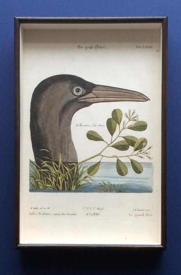 Seligmann Engravings of Waterbirds