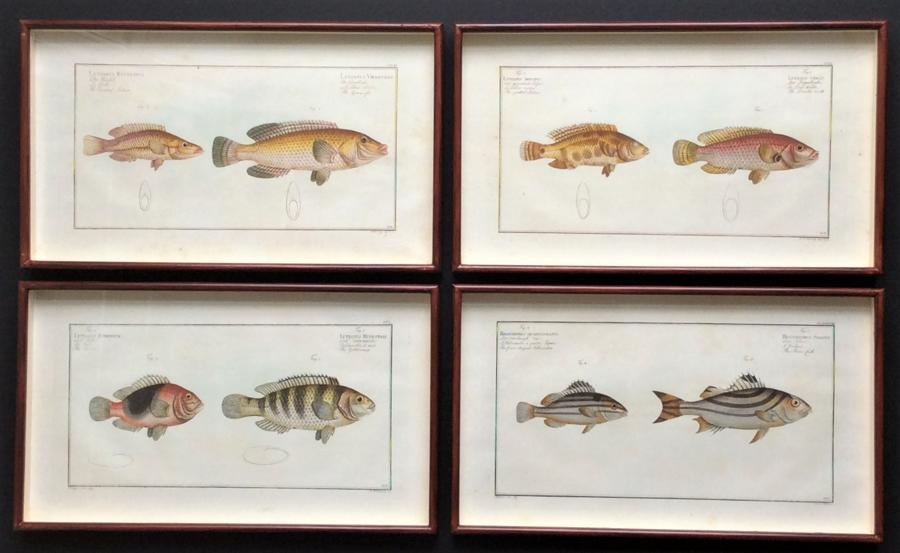 Bloch Engravings of Fish