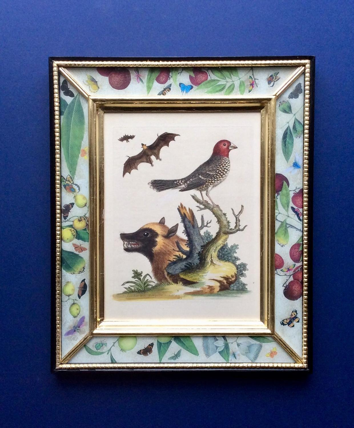 George Edwards 18th century Engravings of Birds