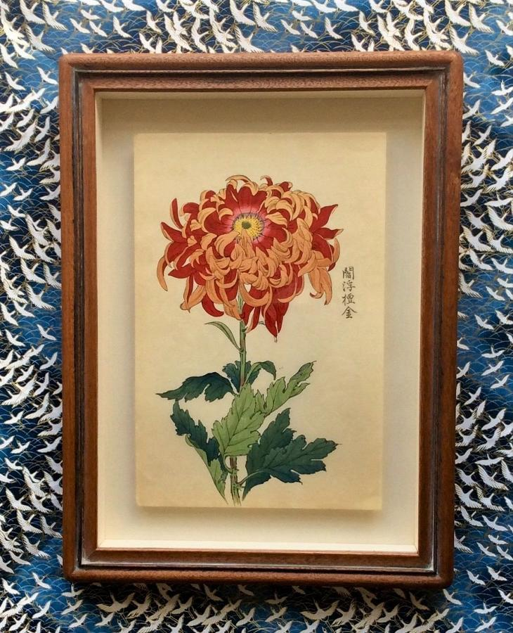 Japanese Chrysanthemum woodblock prints