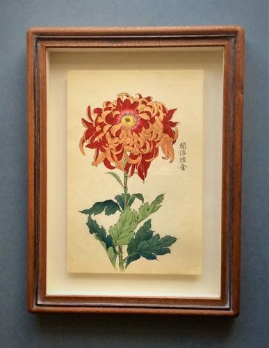 Japanese Chrysanthemum woodblock prints