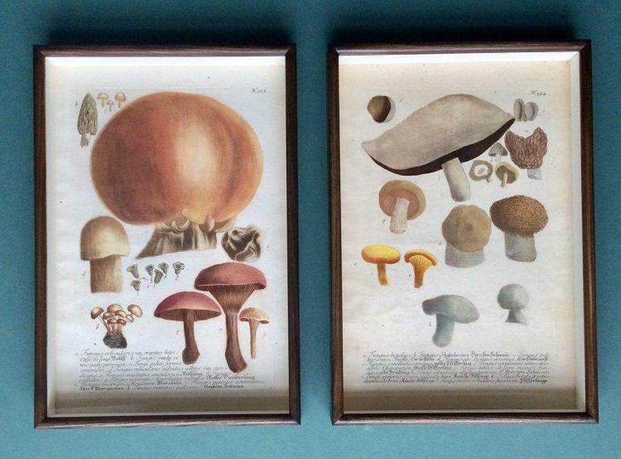 Weinmann - 18th century engravings of mushrooms