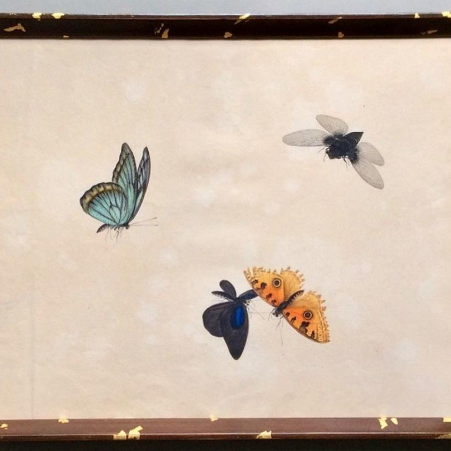 19th century watercolour studies of butterflies etc.