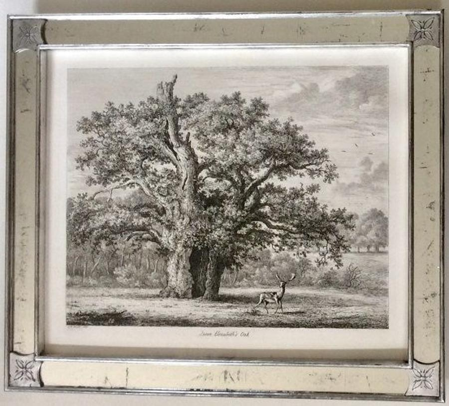 George Jacob STRUTT - 19th century etchings of Trees