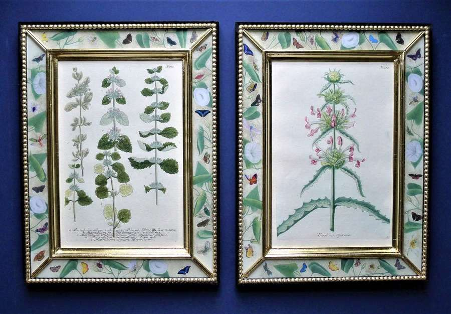 Weinmann - 18th century botanical engravings